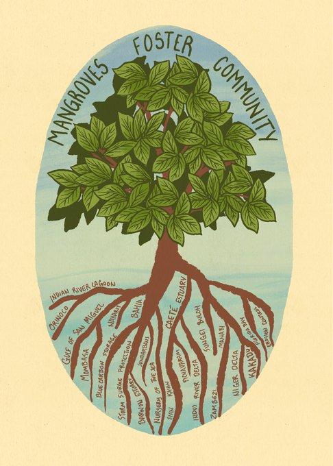 Mangroves Foster Community (002)