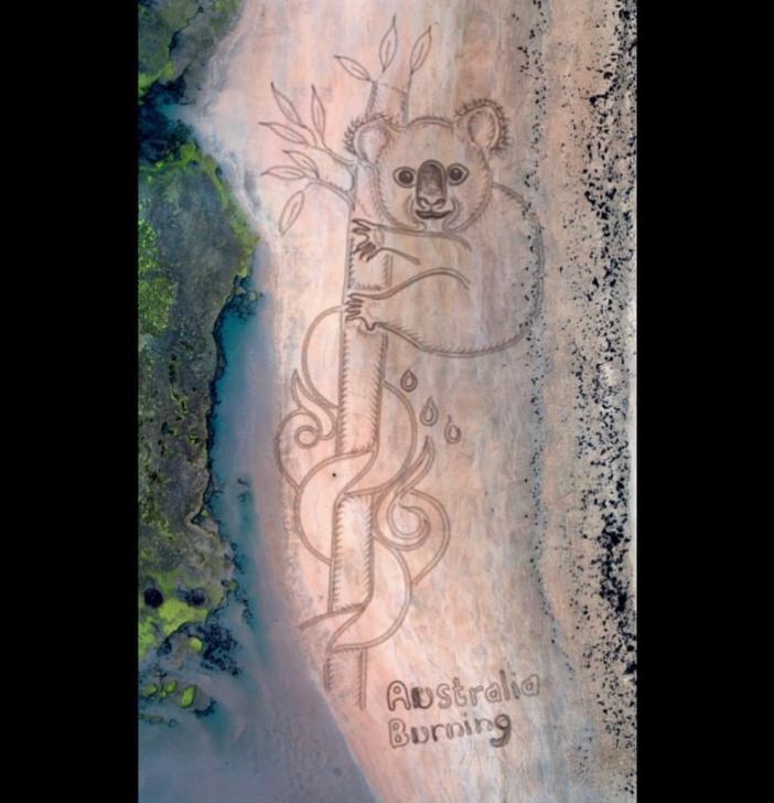 BreatheaBlueOcean Koala